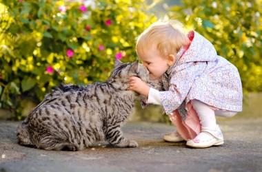 Коти і діти