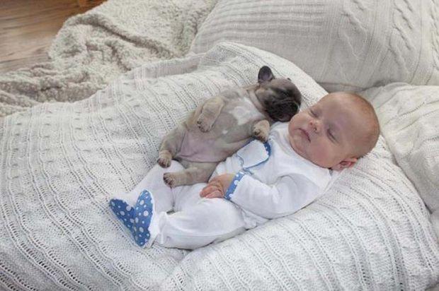 Мопс і дитина