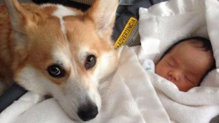 собака врятувала немовля