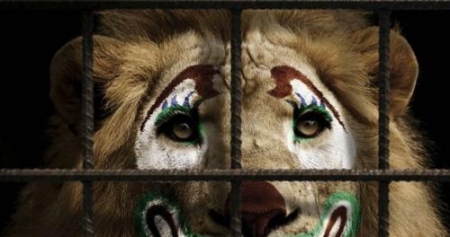 вимога заборонити цирк і звіринці