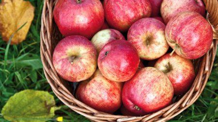 випічка з яблуками