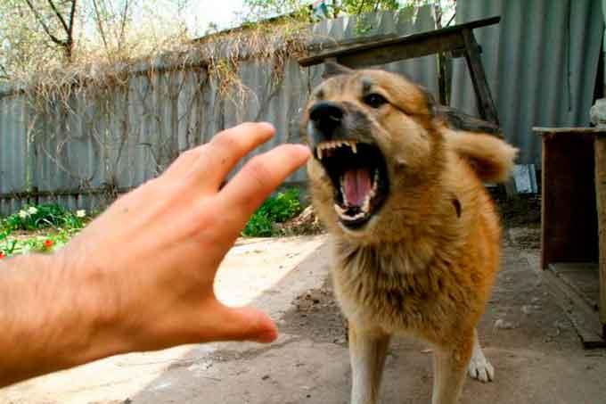 скажений пес покусав господиню