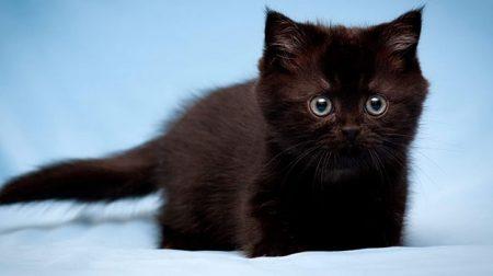 Мультфільм про чорного кота